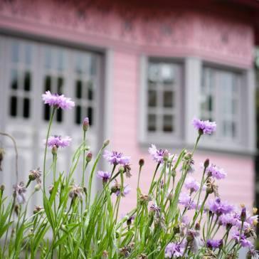 maison rose